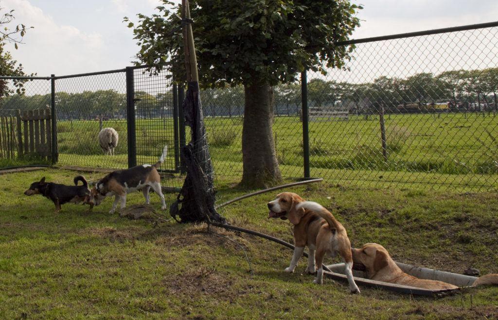 Hondenopvang Hattem