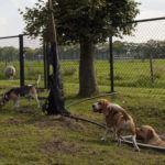 Hondenopvang Zwolle