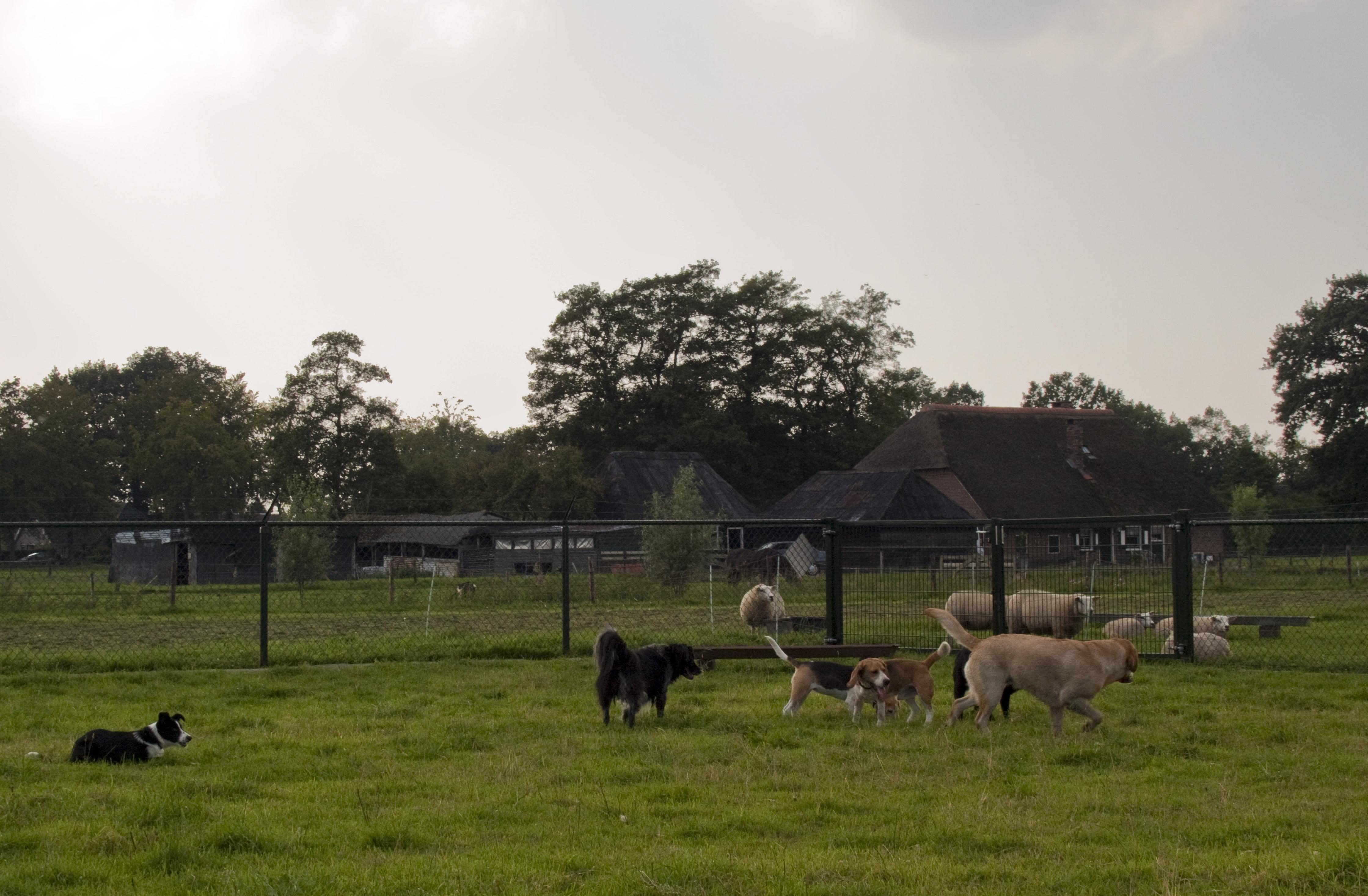 Hondenopvang Harderwijk