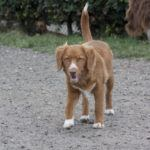 Hondenopvang nabij Hattem