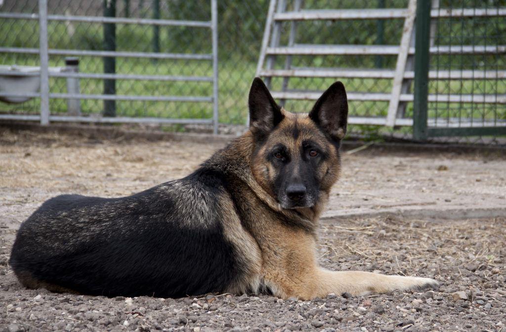 hondenopvang wezep