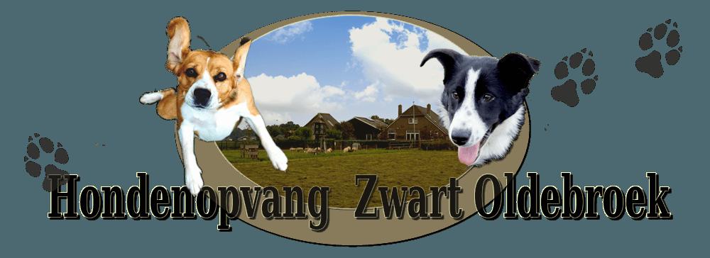 Hondenopvang Zwart